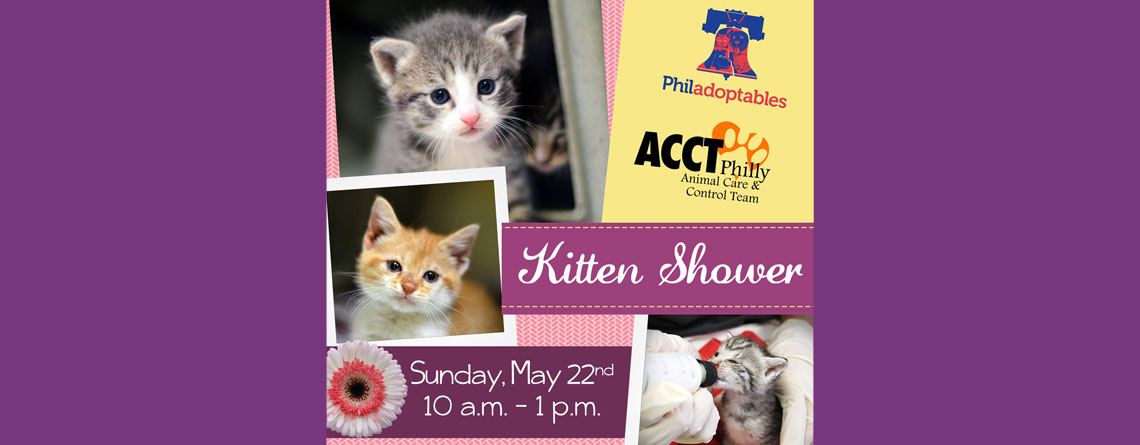 Kitten Shower May 22