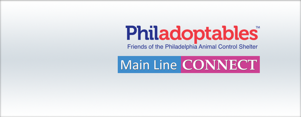 Philadoptables on Main Line Connect!