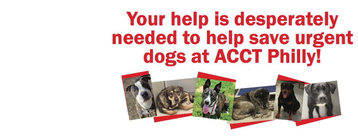 ACCT Philly dogs need your help!