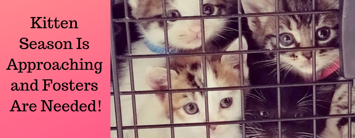 Kitten Season Is Approaching and Fosters Are Needed!