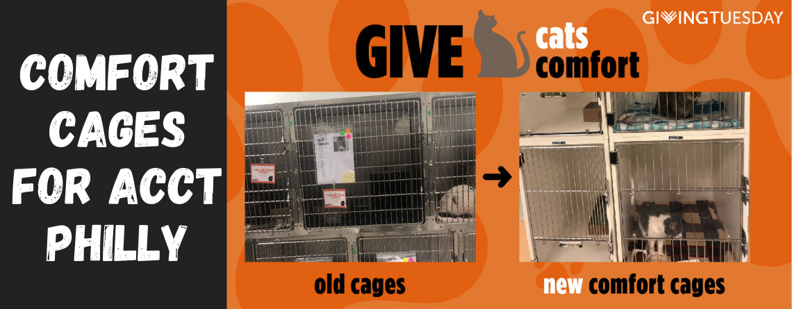 Comfort Cages for ACCT Philly Kitties